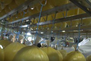 Royal A-ware bouwt mozzarella kaasmakerij in Heerenveen